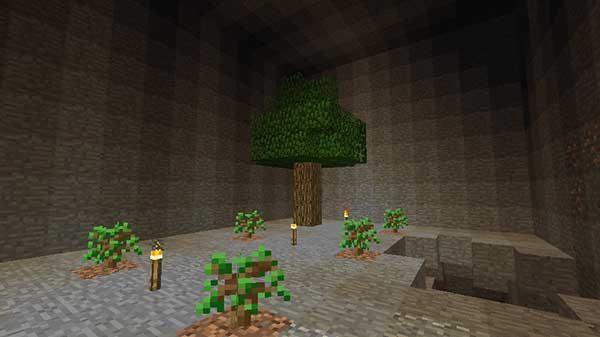 地下の植林場