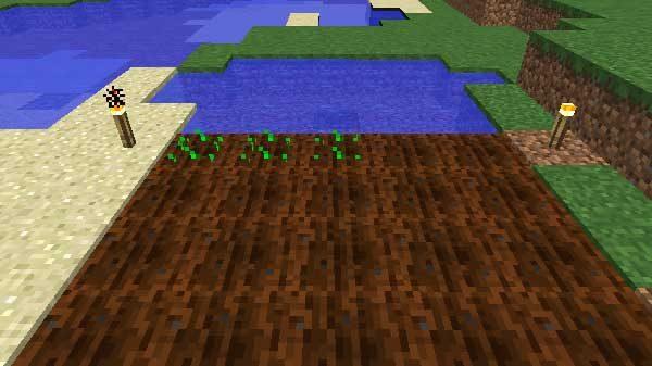 種が植えられた畑