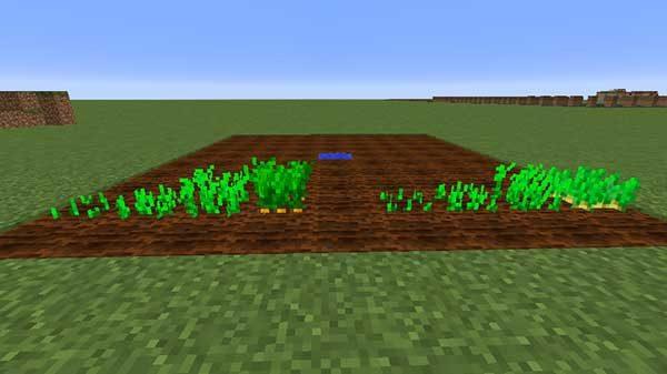 ニンジン・ジャガイモの成長過程