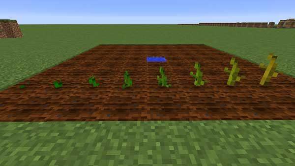 カボチャの茎の成長過程