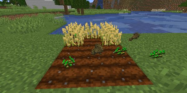 収穫された小麦