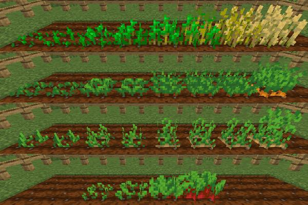 小麦、ニンジン、ジャガイモ、ビートルートの成長過程