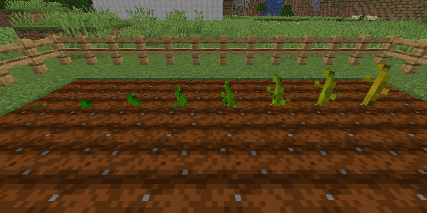 カボチャとスイカの茎の成長