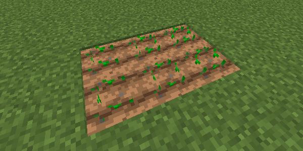 乾いた耕地に植えられた作物