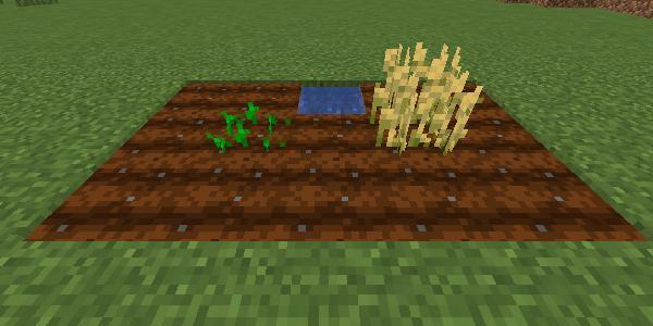 作物の成長の違い