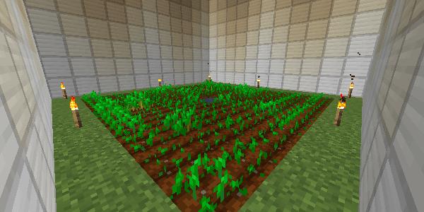 松明が置かれた畑