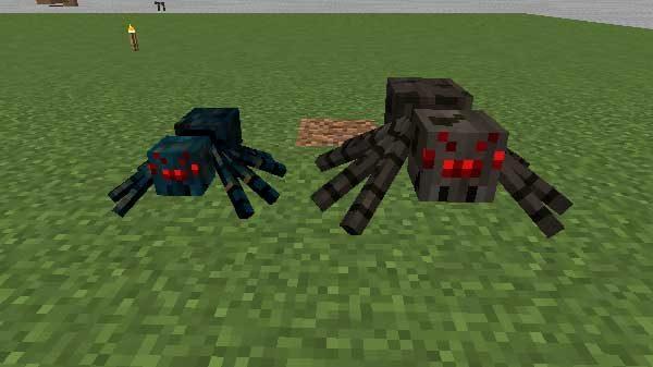 洞窟グモと普通のクモ