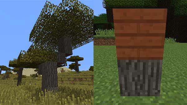 アカシアの木と、アカシアの原木、アカシアの木材