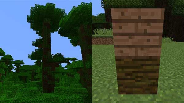 ジャングルの木、原木、木材
