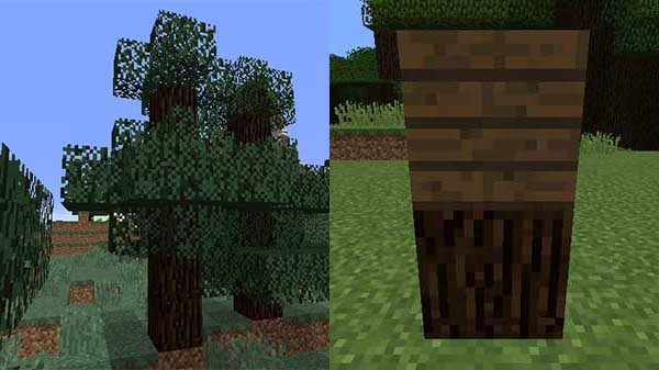 マツの木、マツの原木、マツの木材