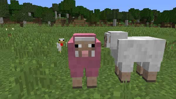 ピンクのヒツジ
