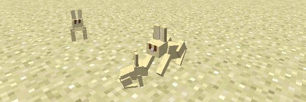 砂漠のウサギ