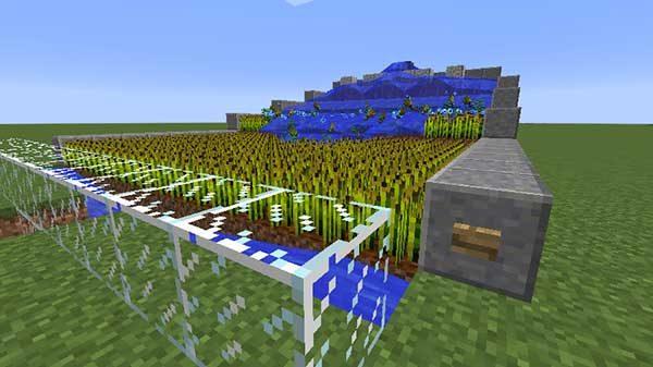 水流で収穫される小麦