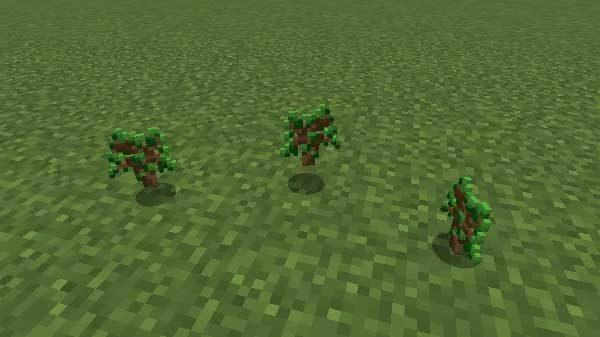 オークの苗木