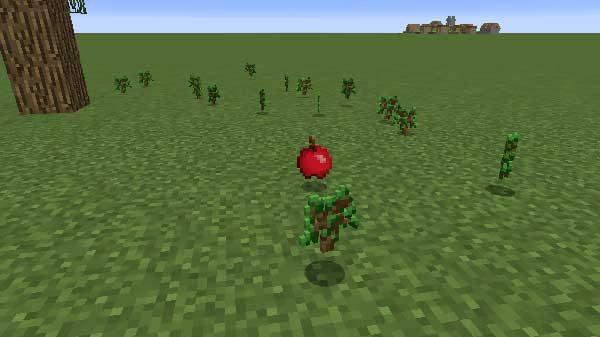 地面に落ちたリンゴ