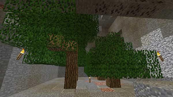 洞窟内の植林場