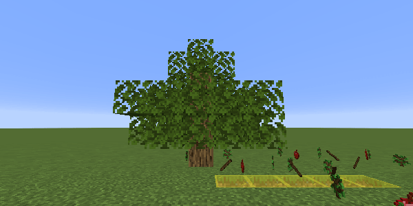 低いオークの木