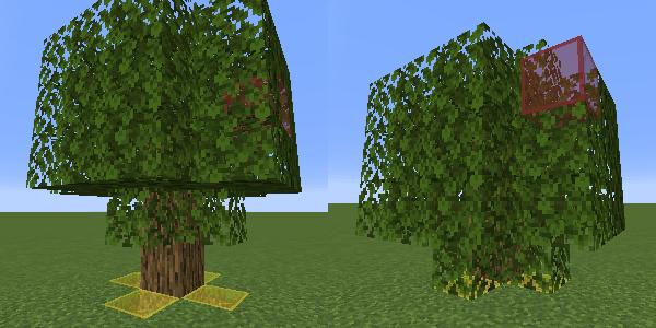 低い位置に葉のあるオークの木