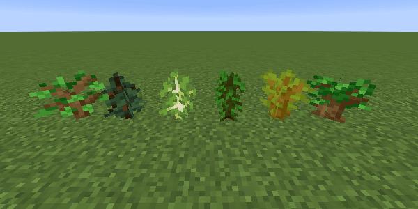 6種類の苗木