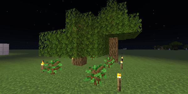 夜に成長するオークの木