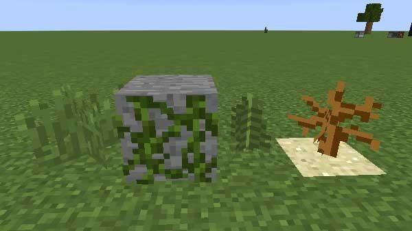 草とツタとシダと枯れ木