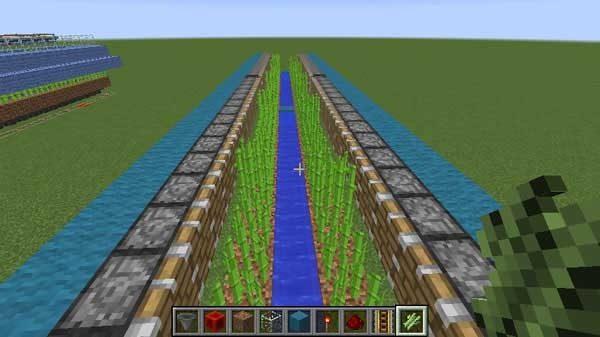 設置された水とサトウキビ
