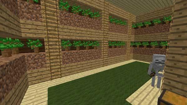 苗木の部屋