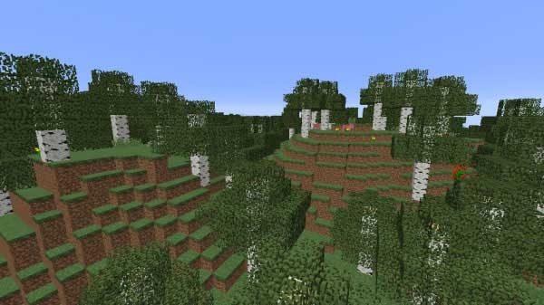白樺の森の丘