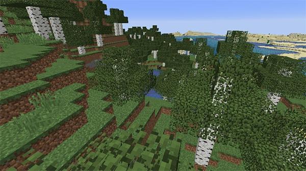 シラカバの森