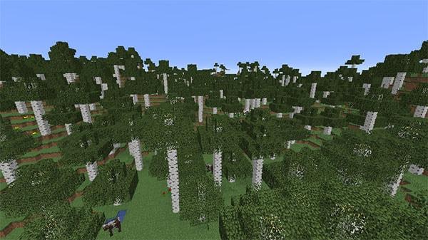 巨大シラカバの森