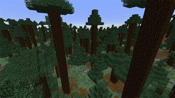 巨大樹のタイガ