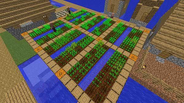 拡大された畑