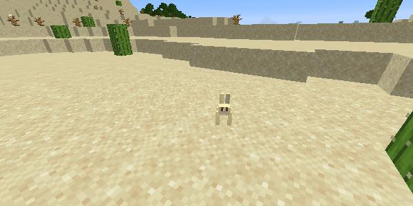 砂漠のうさぎ
