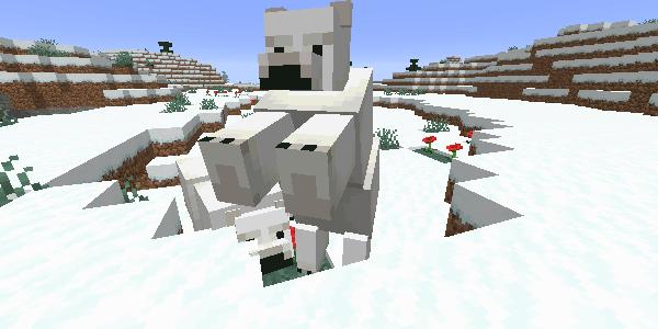 敵対化している子グマを連れたシロクマ