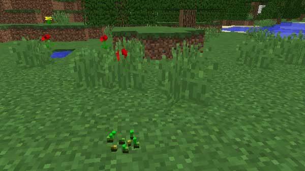 草からドロップした種