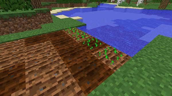 小麦が植えられた畑