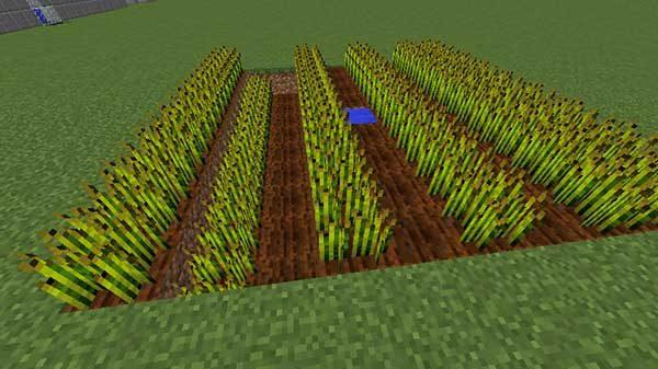 段差のある畑