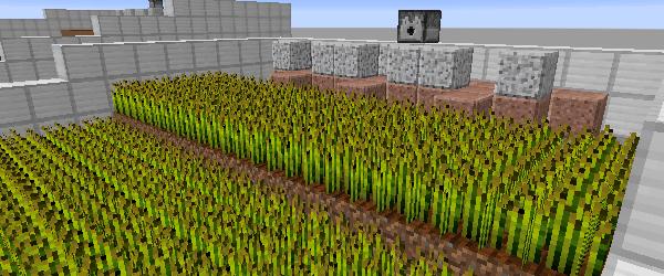 水流で収穫できる小麦畑
