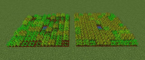 30分後の小麦畑と60分後の小麦畑