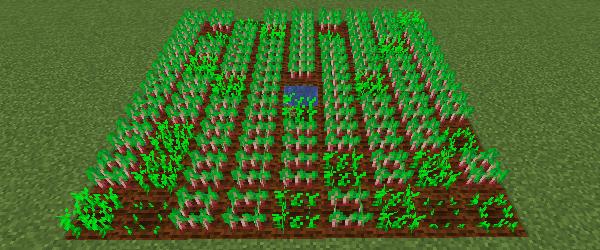 植えてから40分後のビートルート畑の状態