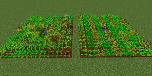 単作の畑と交互に植えた畑