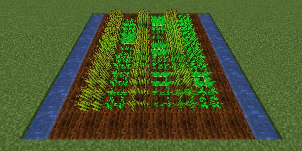 最速で成長する植え方2