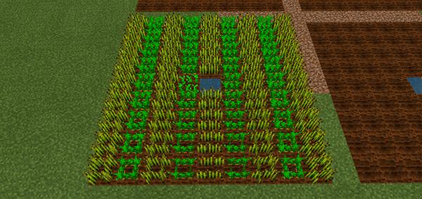 BE版50分後の畑