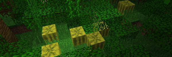 ジャングルに自生するスイカ