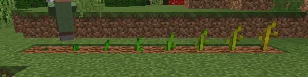 スイカの茎の成長