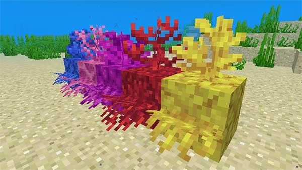サンゴの形状