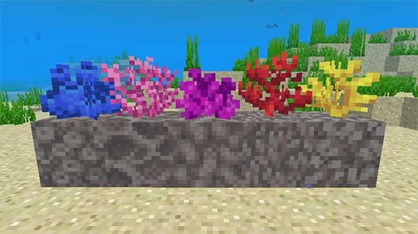各種類の死んだサンゴブロック