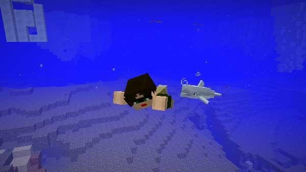 一緒に泳ぐイルカ