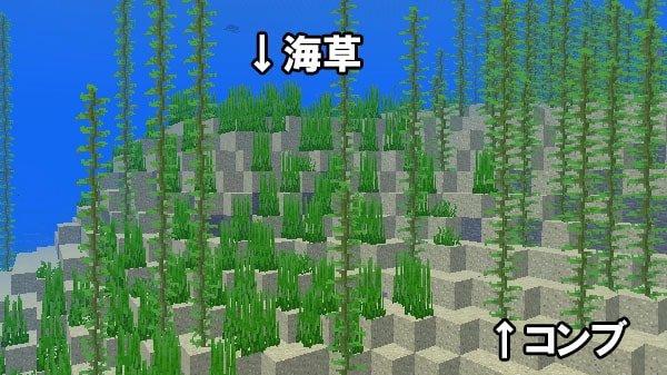 海草とコンブ