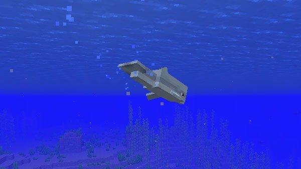 難破船へ案内するイルカ